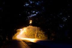 Свет через тоннель дерева ночи Стоковые Фото