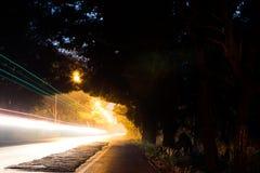 Свет через тоннель дерева ночи Стоковые Изображения