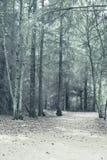Светлые древесины Стоковое Изображение RF