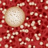 Светлые сферы бактерий или сферы вируса в крови Стоковое Фото