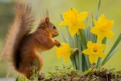 Светлые цветки Стоковая Фотография RF