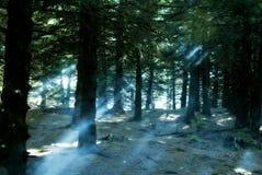 Светлый выходить Стоковое Фото