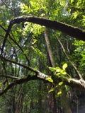 Светлый отражать на листьях Стоковое Фото