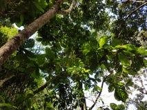 Светлый отражать на листьях Стоковое фото RF