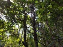 Светлый отражать на листьях Стоковое Изображение RF