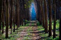 светлый путь к Стоковые Изображения