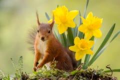 Светлый цветок Стоковое Фото