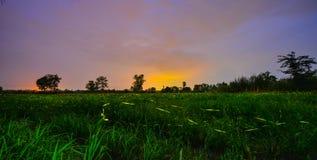 светляк Стоковая Фотография