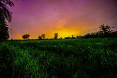 светляк Стоковое Фото
