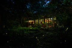 светляк Стоковые Фотографии RF