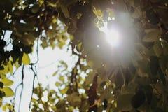 свет Стоковое Фото