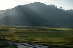 Свет Beautyful и цвет поля риса и mountai th в DonDuong- LamDong- Вьетнаме Стоковые Фотографии RF