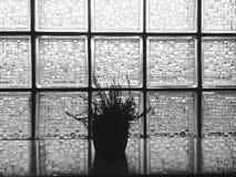 Свет Cristal Стоковые Фотографии RF