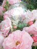Свет Eco розовый Стоковое фото RF