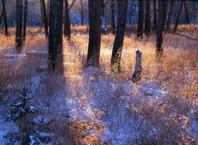 свет fishcreek Стоковое Фото