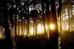 свет forest2 Стоковое Изображение RF