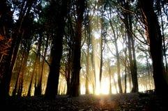 свет forest3 Стоковые Фото