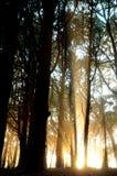 свет forest5 Стоковая Фотография RF