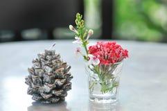 Свеча цветка сосны, свеча рождества стоковая фотография rf