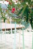 Свечи в стеклянных лампах Украшения свадьбы Wedding в Monteneg Стоковые Изображения