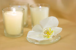 свечки орхидеи цветка Стоковое Фото