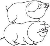 свиньи изображения руки притяжки Стоковые Изображения RF