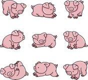 свиньи младенца Стоковые Изображения RF