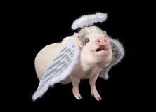 свиньи мухы стоковое фото