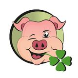 Свинья дня St. Patrick s с клевером Стоковые Фото