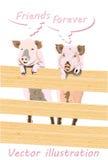 Свинья 2 за загородкой Стоковое Фото