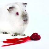Свинья и сердце Стоковое Изображение RF
