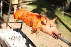 Свинья на вертеле на гриле, свинина жаркого в процессе стоковые изображения