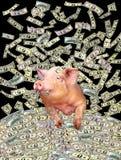 Свинья на куче долларов Стоковые Изображения