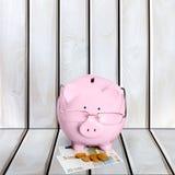 Свинья, налог, финансовый советник Стоковое фото RF