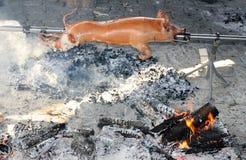 Свинья на протыкальнике Стоковые Изображения RF