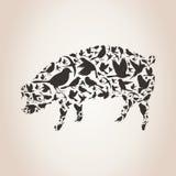 Свинья от птиц Стоковые Изображения