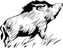 свинья одичалая Иллюстрация штока