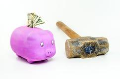 Свинья при доллары ища кувалда Стоковая Фотография RF