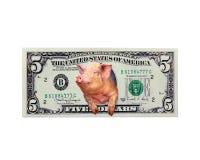 Свинья смотрит из 5 долларов вместо американского изолированного президента Стоковые Фото