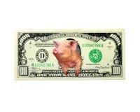 Свинья смотрит из тысячи примечаний доллара вместо американского изолированного президента Стоковое Изображение