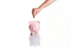 свинья фондом Стоковое Фото