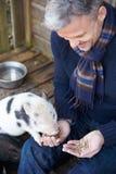 Свинья Micro любимчика зрелого человека подавая Стоковые Изображения