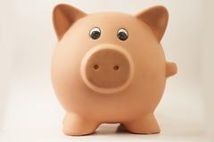 свинья piggy Стоковое Фото