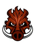 Свирепая сердитая голова дикого кабана Стоковая Фотография RF