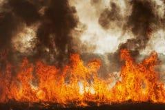 Свирепствуя пламя ожога огня в полях, лесах и черном толстом горькосоленом дыме Большой конец-вверх лесного пожара стоковое фото
