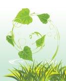 свирль весны листьев травы березы Стоковые Фото