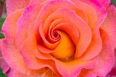 Свирль цветка марди Гра розовая Стоковые Изображения RF