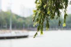 Свисая ветви на парке Стоковое фото RF