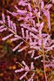 Свисая листья и розовые заводы Стоковая Фотография RF