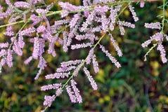 Свисая листья и розовые заводы Стоковое Фото